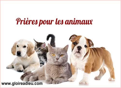 Prières de protection, de guérison et pour le décès des animaux de compagnie