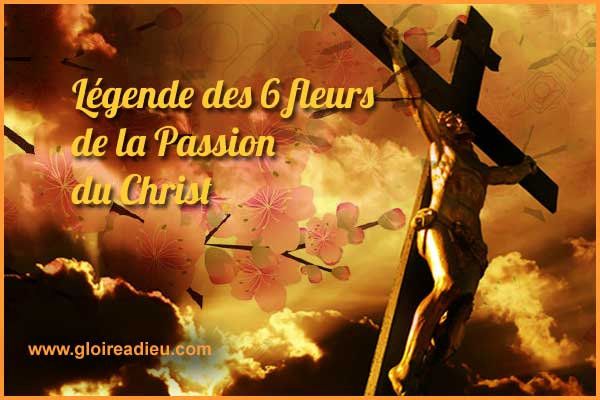 Les 6 fleurs de la Passion de Jésus-Christ