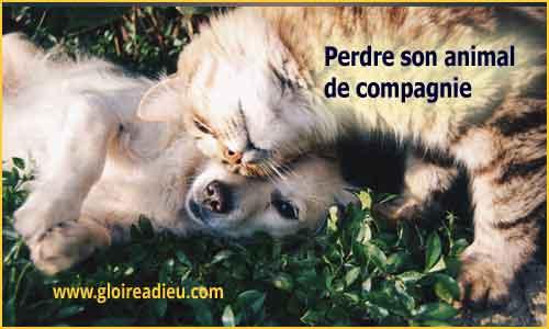 chiot et chaton - www.gloireadieu.com