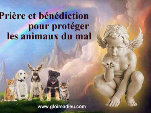 Prière et bénédiction pour protéger les animaux du mal
