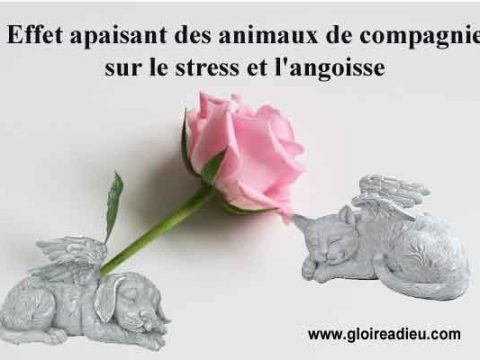 Effet apaisant des animaux de compagnie sur le stress et l'angoisse