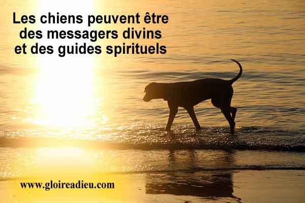 Les chiens peuvent être des messagers divins et des guides spirituels