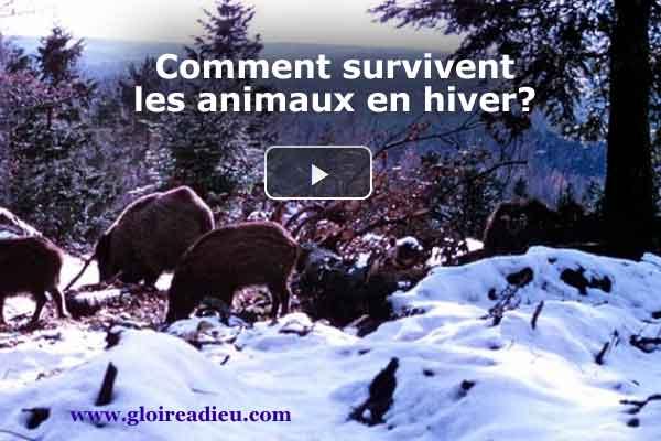 Comment survivent les animaux en hiver? – vidéo