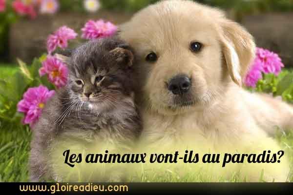 Les animaux vont-ils au paradis?