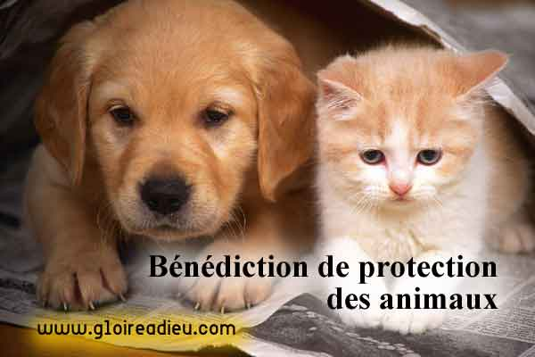 Prière de bénédiction pour protéger les animaux contre le mal