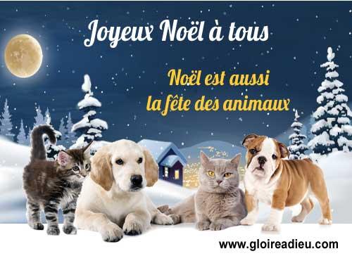 Noël est aussi la fête des animaux