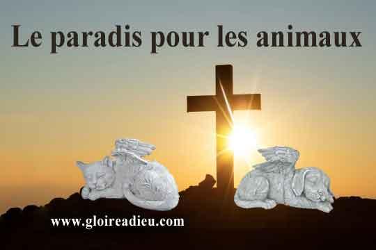 Le pape François entrouvre les portes du paradis aux animaux
