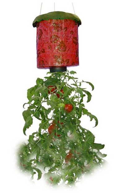 Confinés? Faites pousser vos herbes aromatiques et vos tomates sans jardin