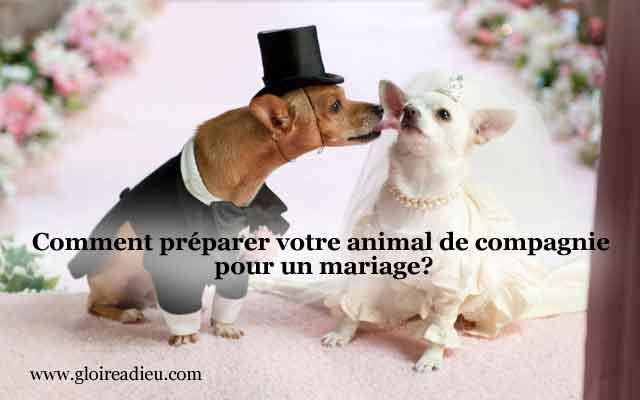 Comment préparer votre animal de compagnie pour votre mariage?