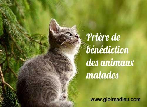 Prière et bénédiction des animaux malades